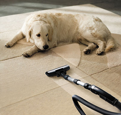 Pet Hair Cleaning in California